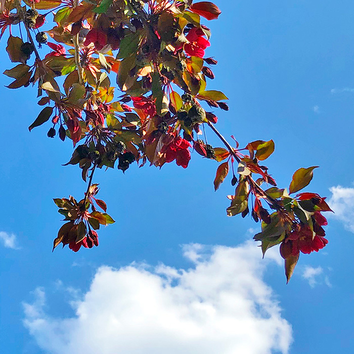 Blauer Himmel mit Blüten