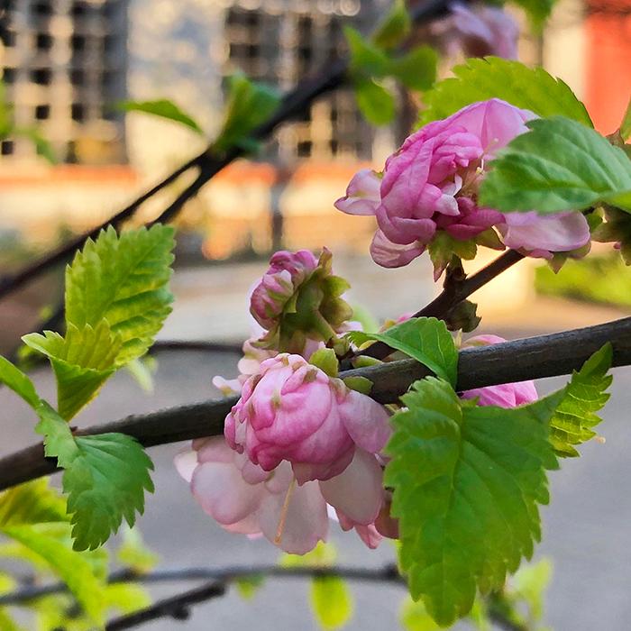 Blumen vor dem Fenster von Ruths Berlin